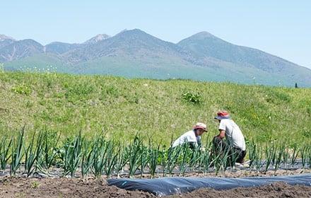 農園 縁側 作業風景3